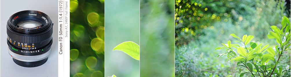Bokeh Canon FD 50f14