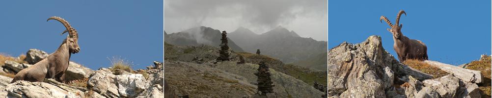 Gotthard 2014 Steinbock